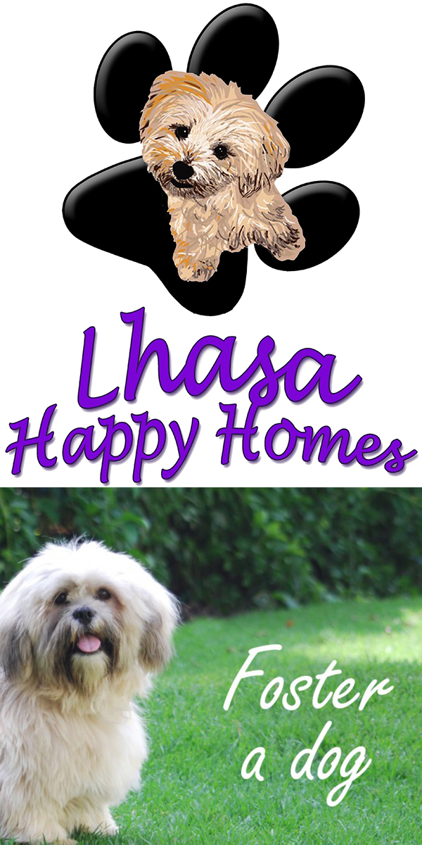 lhasa-happy-homes