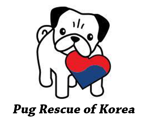 pug-rescue-of-korea