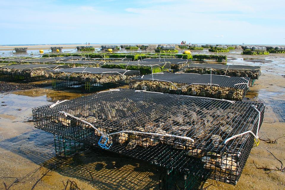 oyster-farm-1404177_960_720